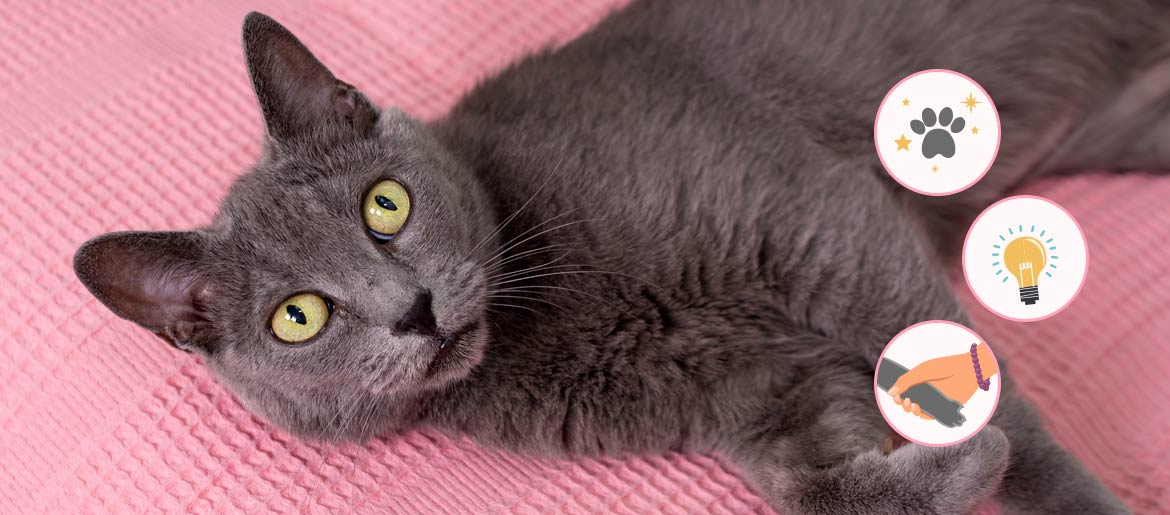 7 Personality Traits of A Russian Blue Cat