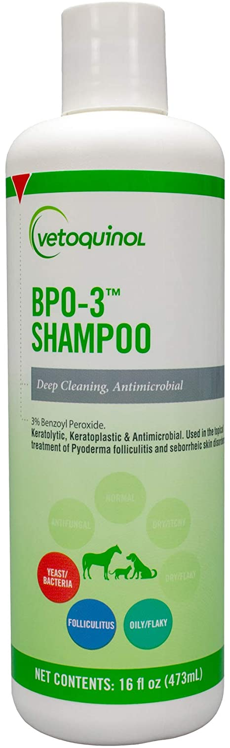 shampoo for cat