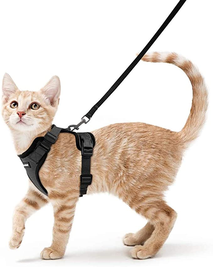 Rabbitgoo Cat Harness and Leash