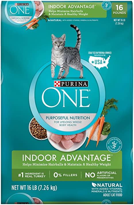 cat healthy