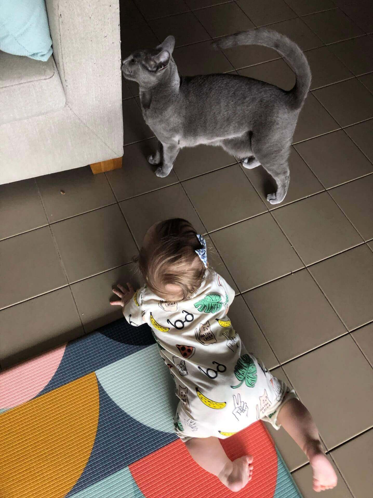 Do Russian Blue Cats Cause Allergies In Babies