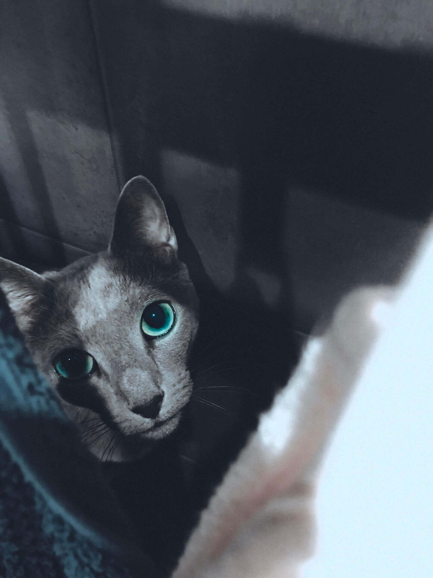 Do Russian Blue Kittens' Eyes Color Change With Time