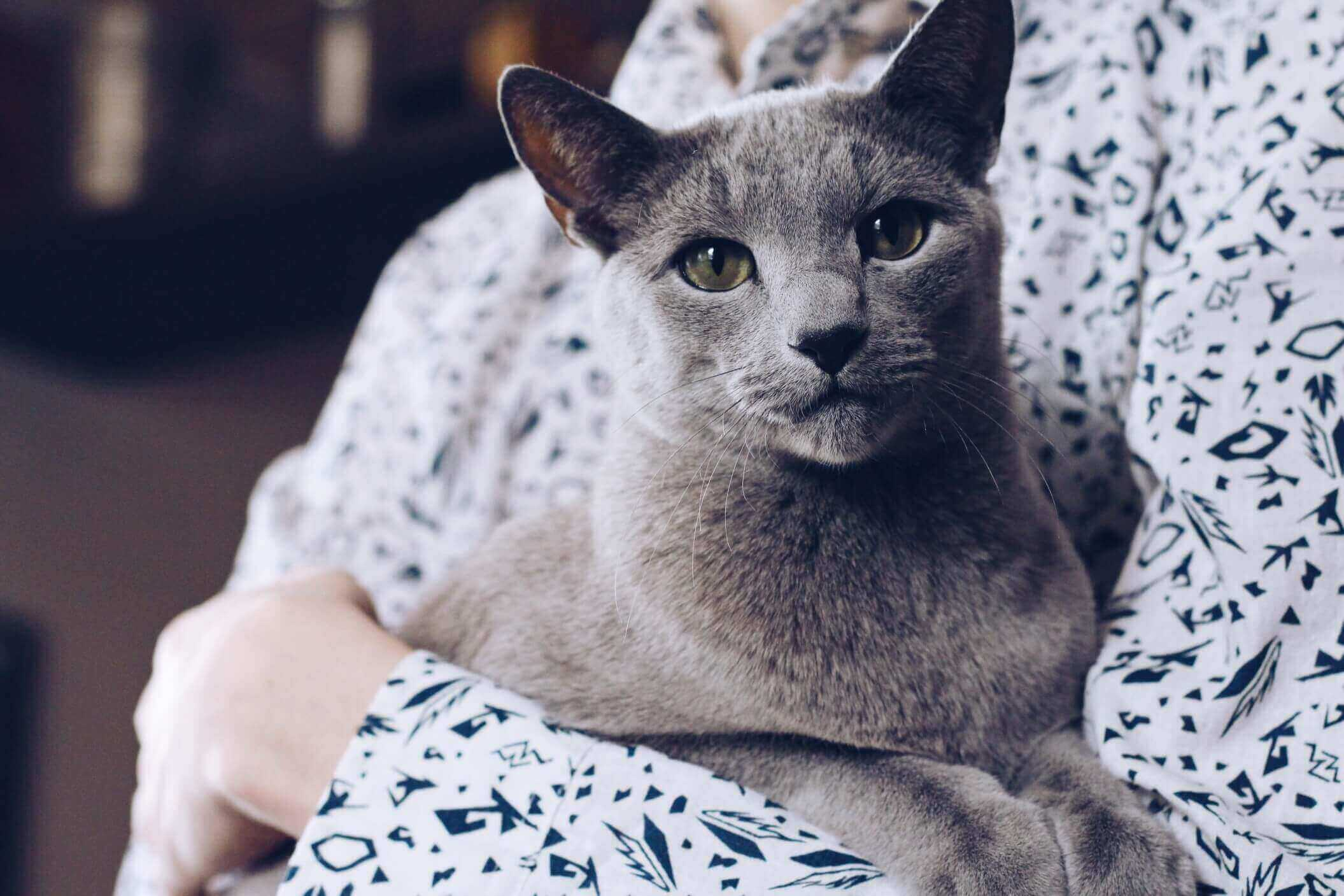 Give Your Russian Blue A Luxurious Life