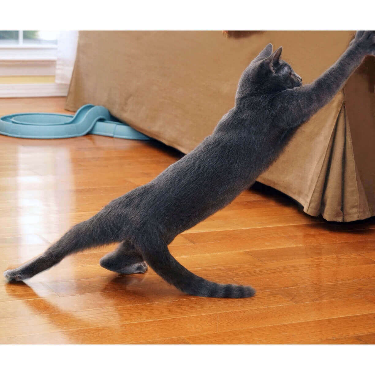 Best Scratching Post For Russian Blue